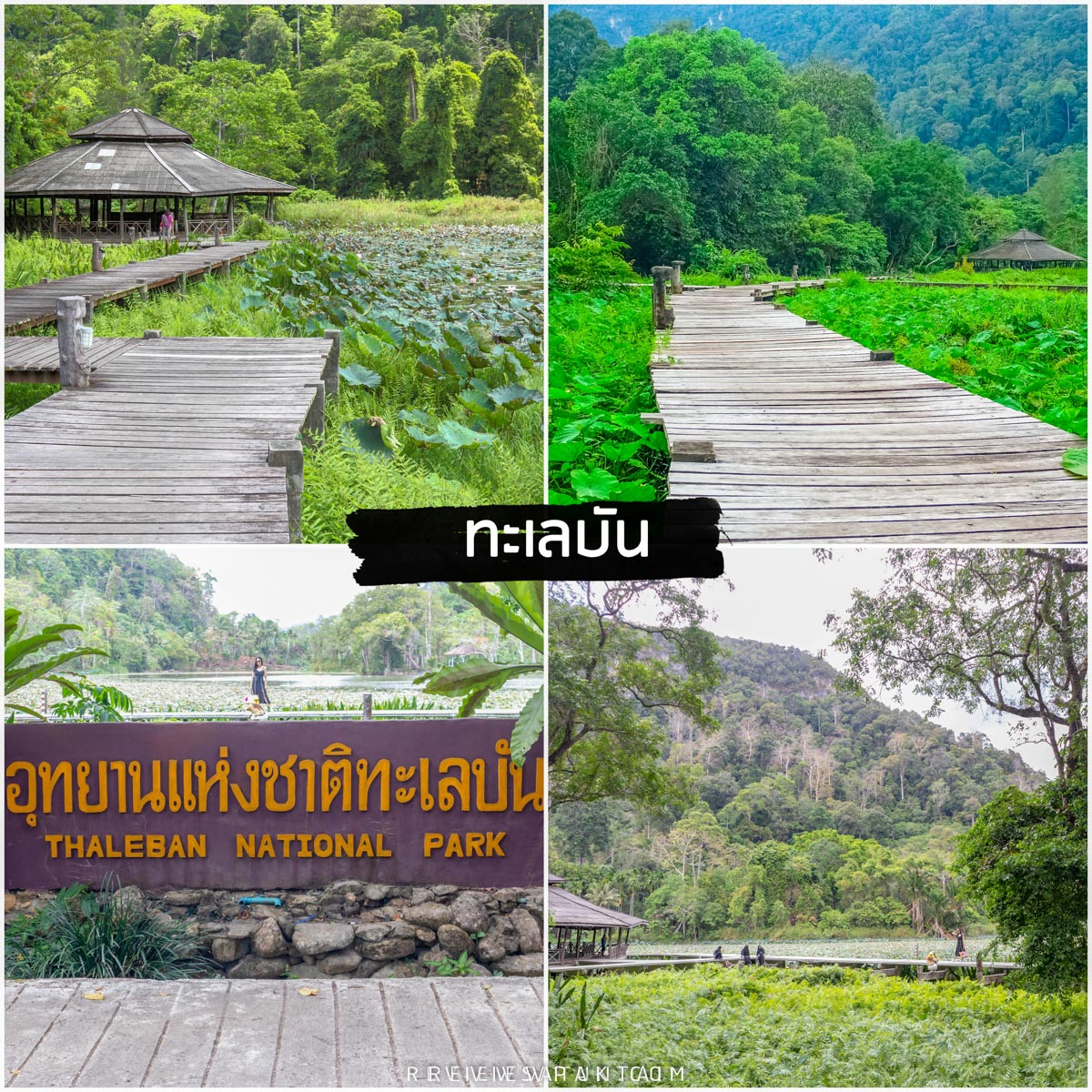ทะเลบัน-จุดชมธรรมชาติของภาคใต้ที่กว้างใหญ่และไปชมบึงบัวกันได้เลย-รายละเอียด-คลิก  จุดเช็คอิน,หลีเป๊ะ,สตูลสดยกกำลังสาม,satunwonderland,เที่ยวเมืองไทยAmazingกว่าเดิม,ชีพจรลงSouth